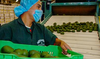 Se prevé que para este año se llegue a la exportación de 35 mil millones de dólares de productos del campo.
