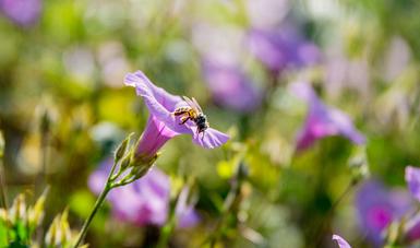 La miel es uno de los principales productos pecuarios que se venden en el extranjero.