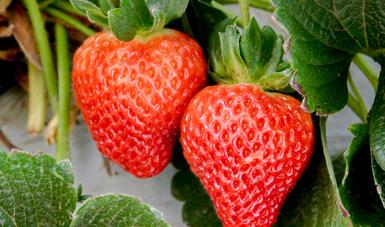 Los principales productos agroalimentarios de exportación a Estados Unidos fueron frutas, hortalizas, bebidas alcohólicas y vinagres.
