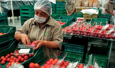 El superávit de la balanza comercial agroalimentaria de México con Canadá alcanzó los 515 millones 751 mil dólares durante el primer semestre del 2018, luego de que las exportaciones a esa nación sumaron mil 230 millones 553 mil 637 dólares.