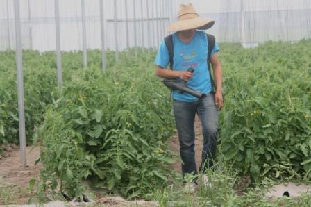 En la parte agrícola se protegen nueve cultivos: cártamo, garbanzo, higo, maíz, mango, naranja, sorgo y trigo; en la pecuaria se aseguran especies de bovinos, caprinos y ovinos.