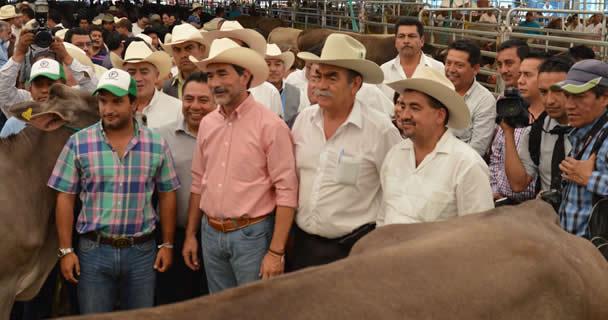Participan más de 45 ganaderías de nueve estados, con 500 ejemplares, en la XLVI Exposición Nacional de Ganado Suizo de Registro.