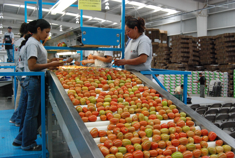 Aumentan exportaciones agropecuarias 22.7 por ciento en septiembre