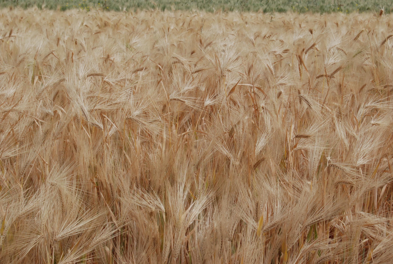 Reportan aumento de exportaciones agroalimentarias de México hacia la Unión Europea