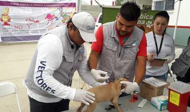 Vacunando a perro.