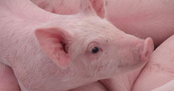 Los estados de Colima, Michoacán, Morelos, Oaxaca y Querétaro, así como el Distrito Federal, fueron declarados por la SAGARPA como libres de la Enfermedad de Aujeszky, propia de los cerdos.