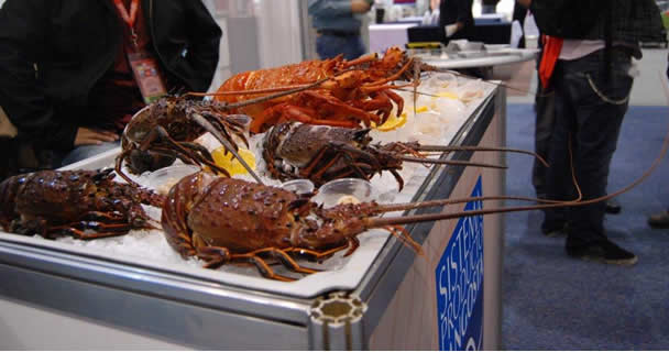 La pesquería de langosta de Baja California y Baja California Sur representan, en conjunto, el 76 por ciento de la producción nacional y son una fuente permanente de empleo.