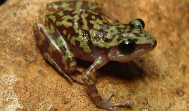 El trabajo de conservación que se realiza en la CONANP ha sido fundamental para el descubrimiento y protección de nuevas especies