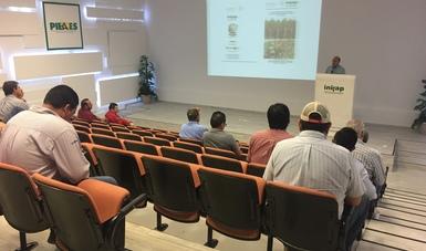 INIFAP presenta tecnología para la producción de maíz y cártamo en Sonora