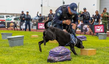 """El SENASICA organizó el """"Primer Foro Interinstitucional sobre el uso de Caninos de Trabajo y Asistencia"""" cuyo objetivo es generar el intercambio de experiencias y conocimientos en materia de entrenamiento y cuidado de los caninos de trabajo."""