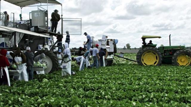Normalización Agroalimentaria