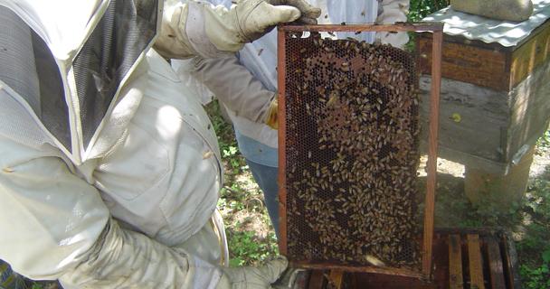 De enero a agosto del 2014, México exportó al mundo 33.1 mil toneladas de miel.