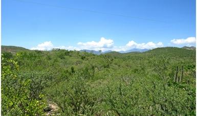 Paisaje de zona forestal en Baja California Sur.
