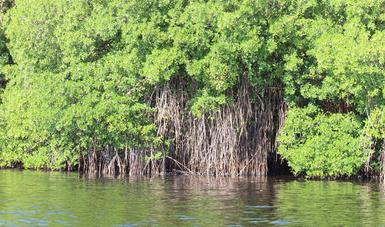 Paisaje de manglar en Ciudad del Carmen, Campeche.