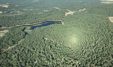 Vista aérea de zona de plantaciones forestales en Chichuahua.