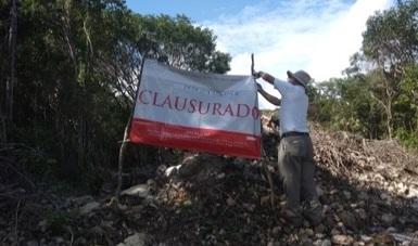 La PROFEPA clausuró un predio por la afectación de selva, al efectuar cambio de uso de suelo en terrenos forestales para la construcción de un lote comercial, en el municipio de Solidaridad, Quintana Roo.