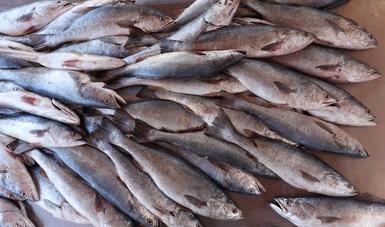 Es resultado del trabajo desarrollado por el sector pesquero y las autoridades encabezadas por el secretario de Agricultura y Desarrollo Rural, Víctor Villalobos Arámbula, informó el comisionado nacional de Acuacultura y Pesca, Raúl Elenes Angulo.