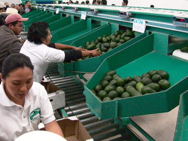 La SAGARPA informó que las exportaciones de productos agroalimentarios (incluye agricultura, ganadería, pesca y agroindustria, principalmente) de México a Japón aumentaron 16 por ciento durante el primer semestre de 2015.