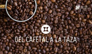La iniciativa tiene como objetivo incrementar la producción y productividad de CESMACH y promover la integración de su café tostado y molido en nuevas cadenas de comercialización.
