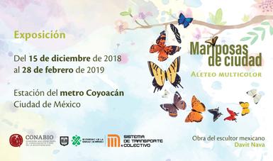 bp280_mariposas_metrocoyoacan_20dic18