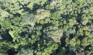 INIFAP clasifica vegetación en selvas tropicales mediante el uso de imágenes satelitales y drones