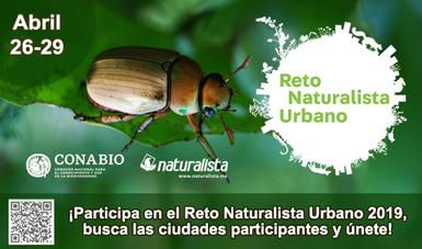 Participa en el Reto Naturalista Urbano 2019