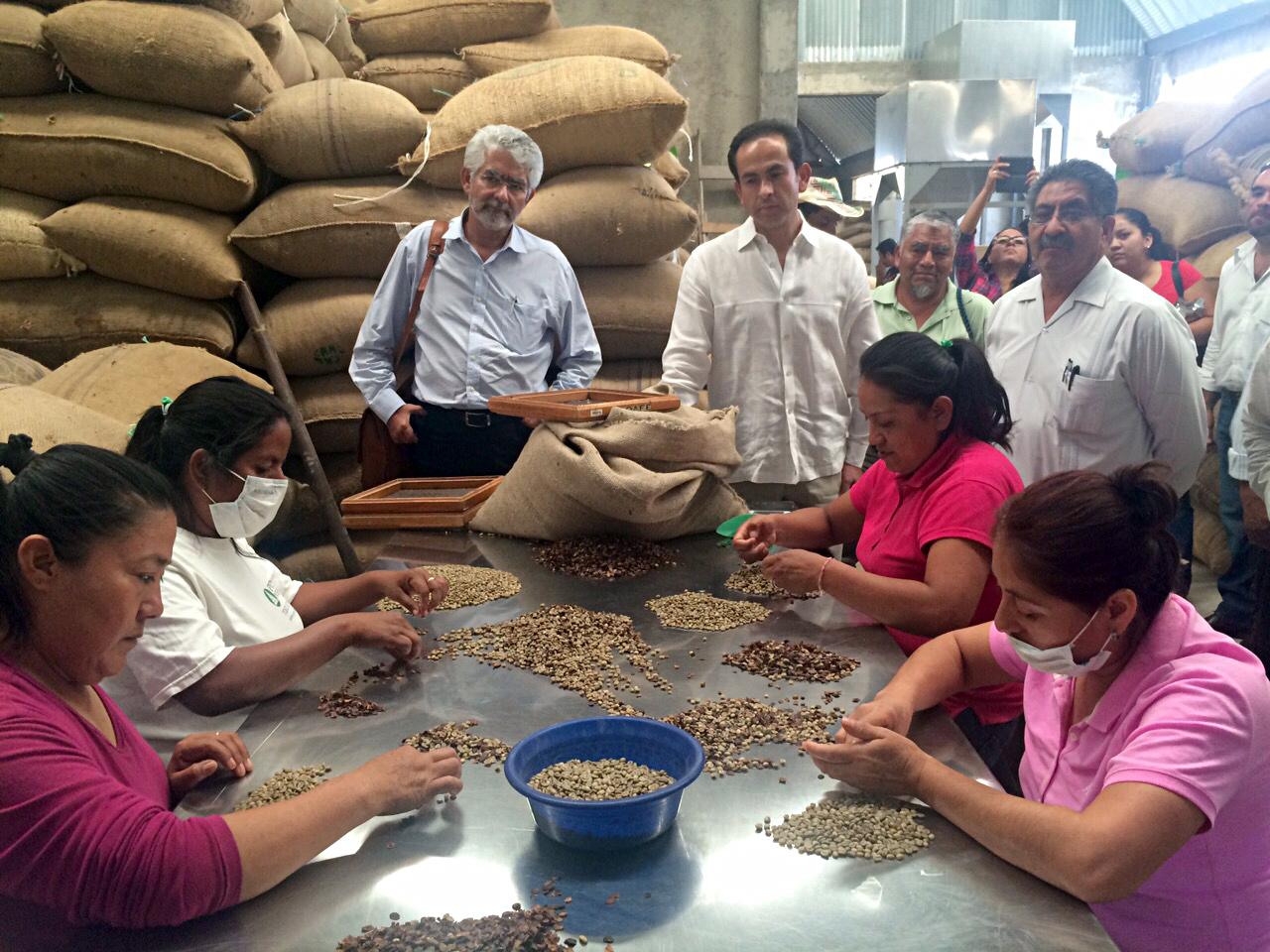 La SAGARPA puso en marcha nueva infraestructura para el proceso de beneficio del café en el estado de Oaxaca, lo que contribuirá a brindar un valor agregado a la producción y una mayor rentabilidad para los caficultores.