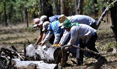 Grupo de hombres moviendo un tronco en el bosque