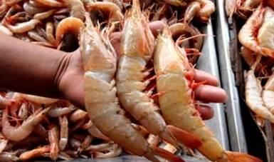 La Conapesca refrenda su compromiso de promover las medidas de manejo pesquero de manera sustentable.