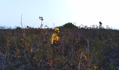Desde el 14 de abril se combate incendio forestal en la Reserva de la Biosfera de los Petenes.