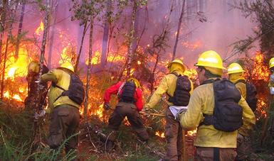 Para reportar incendios en Áreas Naturales Protegidas llama a los números gratuitos 911 y el 01 800 INCENDIO (01 800 46 23 63 46).