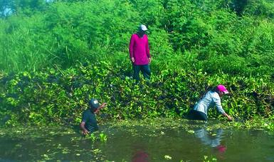 La Estrategia tiene el propósito de sanear y restaurar la funcionalidad de las cuencas y los ríos de la región para proteger al manatí.