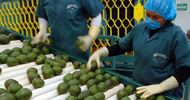 La Secretaría de Agricultura, Ganadería, Desarrollo Rural, Pesca y Alimentación (SAGARPA) invierte en este año 180 millones de pesos