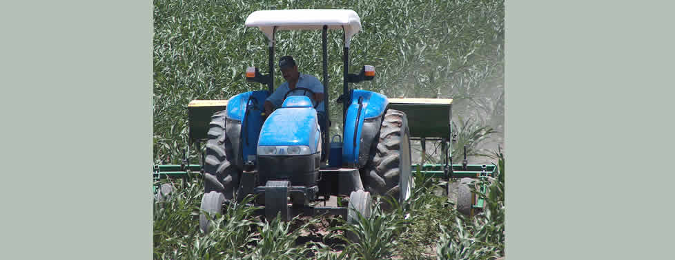 La Secretaría de Agricultura, Ganadería, Desarrollo Rural, Pesca y Alimentación  (SAGARPA) ha canalizado mil 384 millones de pesos, a través del Programa de Incentivos para Productores de Maíz y Frijol (PIMAF)