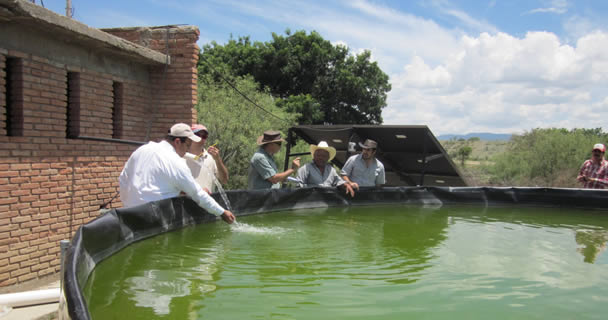 Activa SAGARPA programa piloto de Acuacultura