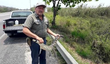 Reintegra Profepa un cocodrilo y una boa constrictor a su hábitat y recibe tres venados cola blanca en Tamaulipas