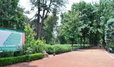 Los árboles deben plantarse en espacios adecuados donde generen beneficios y no pongan en riesgo a otras especies del ecosistema.