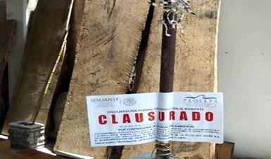 Profepa asegura 3.24 m3 de madera aserrada en Nuevo León