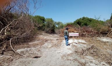 Profepa clausura actividades de cambio de uso de suelo en terrenos forestales en Colima