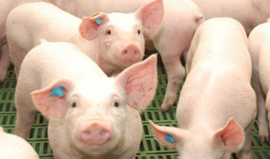 Los tipos de rastros se refieren a aquellos que operan bajo autorización federal, estatal o municipal, son establecimientos diseñados para el sacrificio de especies pecuarias: bovino, porcino, ovino, caprino, equino y ave