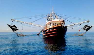 Como parte de las acciones en materia de ordenamiento pesquero y acuícola, el Gobierno Federal puso en marcha, a través de la Conapesca, el programa de Ordenación Pesquera.