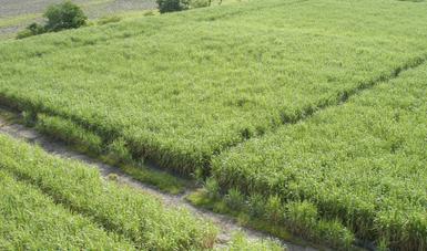 Se estará convocando a los productores beneficiarios a que acudan a los Centros de Apoyo al Desarrollo Rural (Cader's).