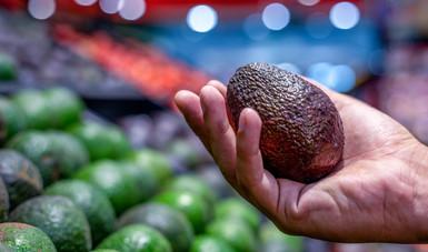 Declara Agricultura libres de plagas a productores de aguacate de Puebla y Guanajuato.