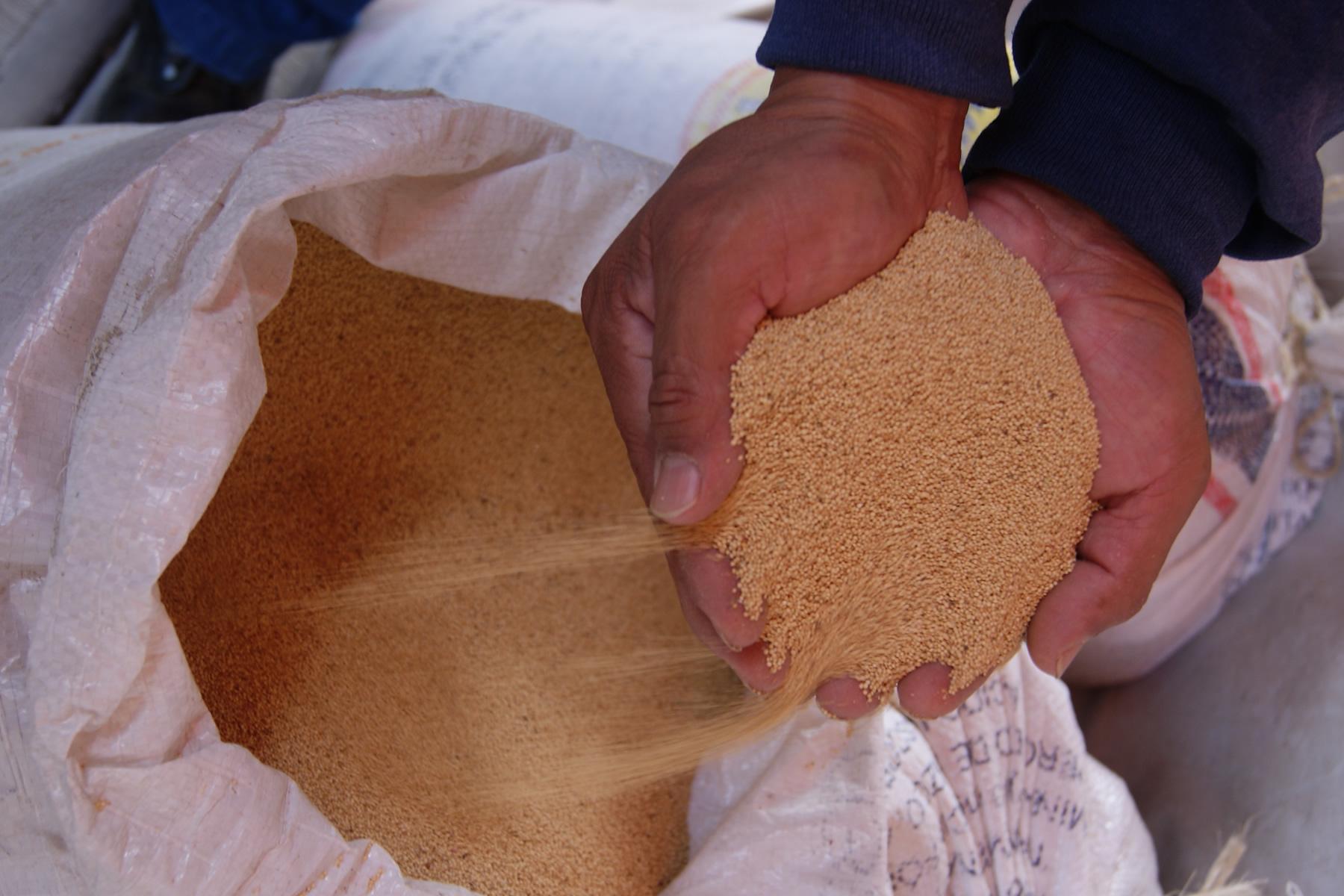 Con el objetivo de elevar la producción de amaranto en el Distrito Federal, productores, la SAGARPA y el Gobierno capitalino trabajan en la implementación de un nuevo esquema de Extensionismo Holístico y en la adopción de innovaciones para el sector.