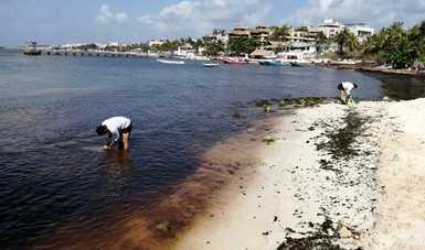 Personal de marina tomando muestres de Playa del Carmen para estudio del sargazo.