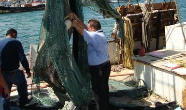 Inicia Profepa la certificación de embarcaciones camaroneras en Campeche