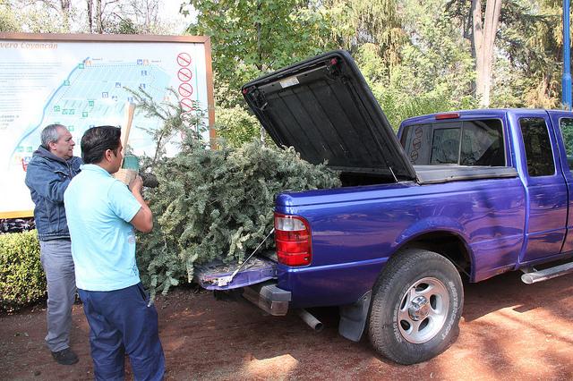 Ciudadanos entregando árbol de navidad para reciclar