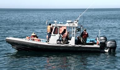 Atiende Profepa inicio de la temporada de camarón en el Alto Golfo de California