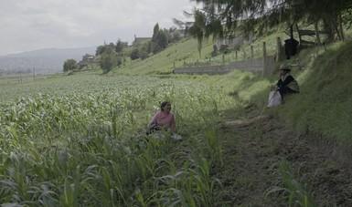 Este documental condensa, en 20 minutos una mirada sobre la comida, el acontecer cotidiano y la familia.