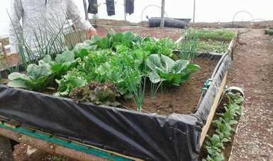 En el Fogón se pueden cultivar 28 tipos de especies,  lleva tierra y lombricomposta